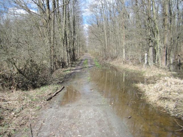Überfluteter Waldweg auf dem Weg nach Messel (Bild: Klaus Dapp)