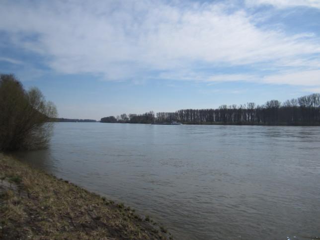 Blick auf den (neuen) Rhein Richtung Rheinland Pfalz (Bild: Klaus Dapp)
