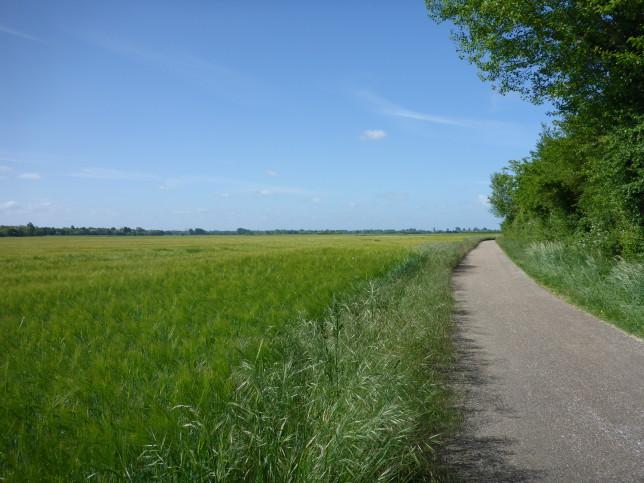 Aue der Loire (Bild: Klaus Dapp)