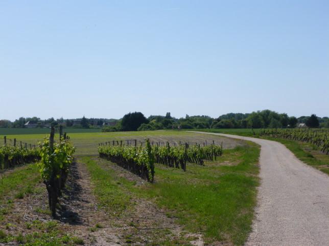 """Wein""""berge"""" auf dem Weg nach Blois (Bild: Klaus Dapp)"""