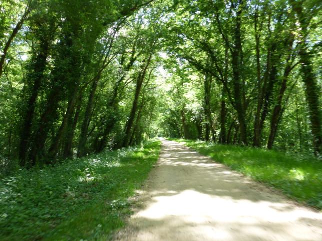 Waldweg bei La Chapelle-sur-Loire als Teil des Eurovelo 6 (Bild: Klaus Dapp)