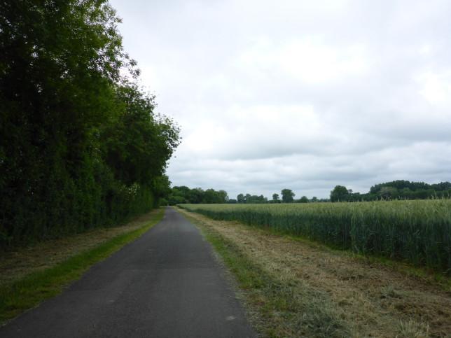 Weg in der Aue der Loire bei Le Vieux Marillais (Bild: Klaus Dapp)