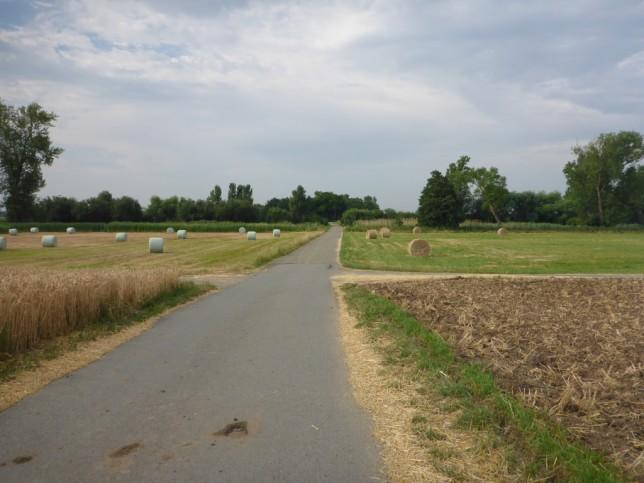 Abgeerntete Felder im Hessischen Ried (Bild: Klaus Dapp)