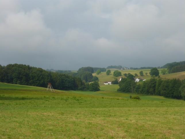 Hügelige Landschaft im Allgäu (Bild: Klaus Dapp)