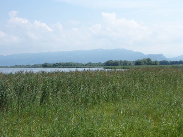 Natura 2000 Gebiet am alten Rheindelta (Bild: Klaus Dapp)
