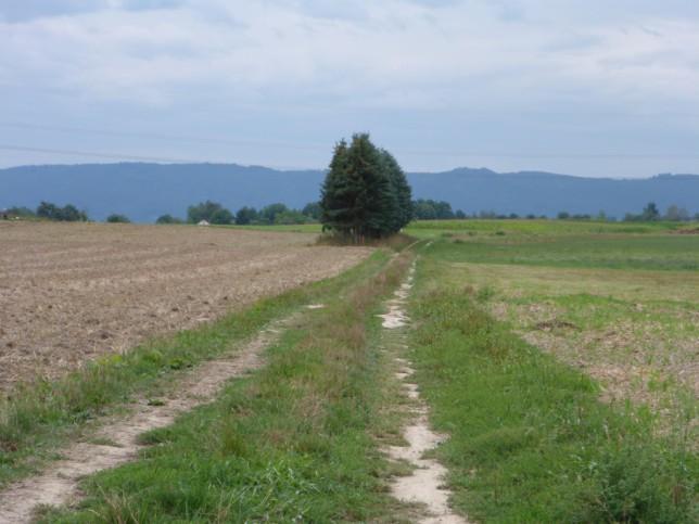 Empfohlener Weg aus dem Radroutenplaner BW bei Radolfzell (Bild: Klaus Dapp)