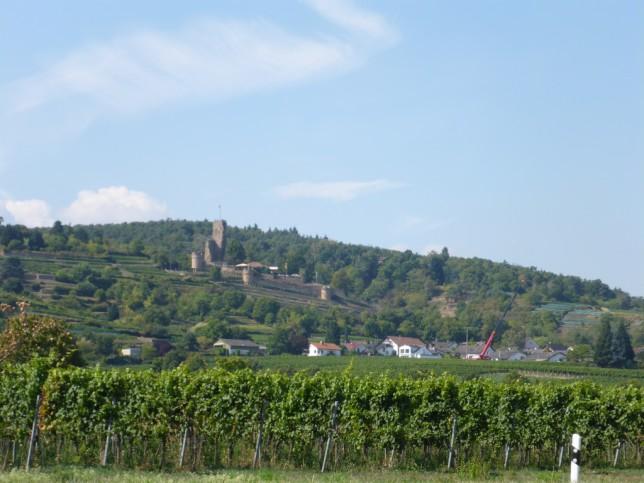 Weinberge bei Bad Dürkheim (Bild: Klaus Dapp)