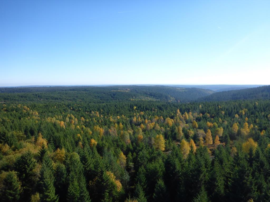Blick vom Hohlohturm in den Nordschwarzwald (Bild: Klaus Dapp)