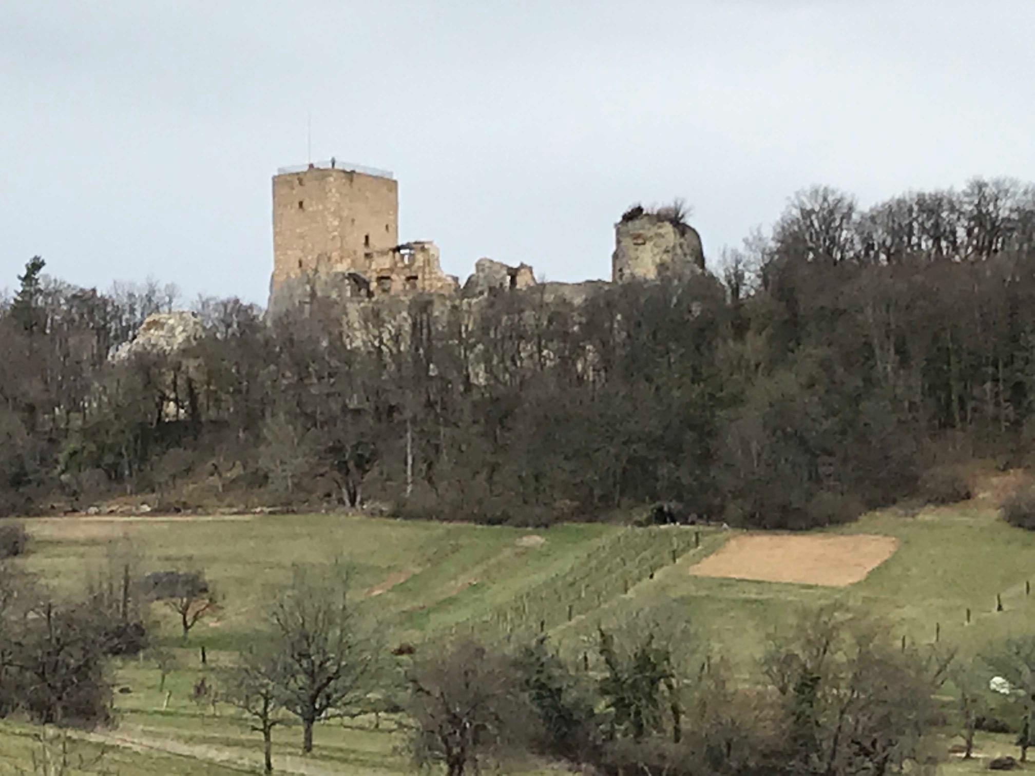 Ruine Landskron oberhalb von Flüh (Bild: Klaus Dapp)