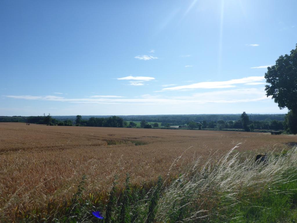 Blick über das Tal der Saône oberhalb von Tornus (Bild: Klaus Dapp)