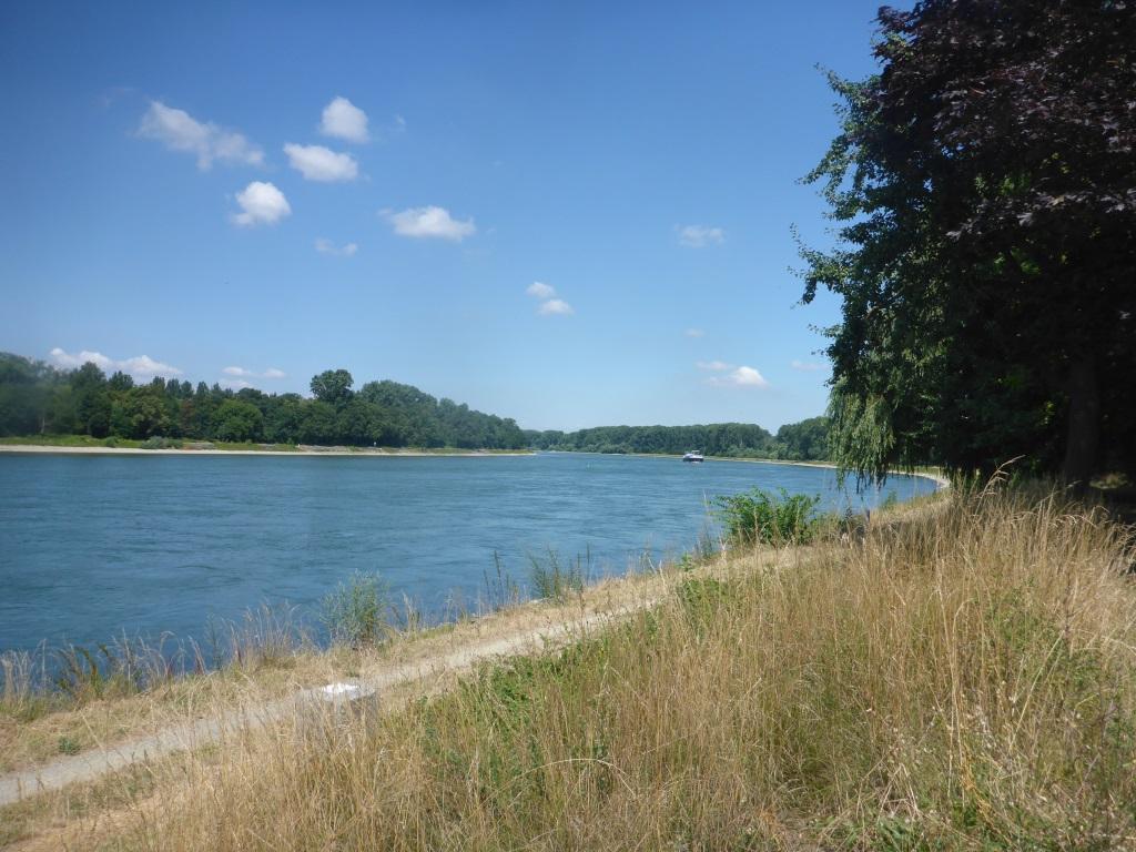 Blick auf den Rhein bei Altlußheim (Bild: Klaus Dapp)