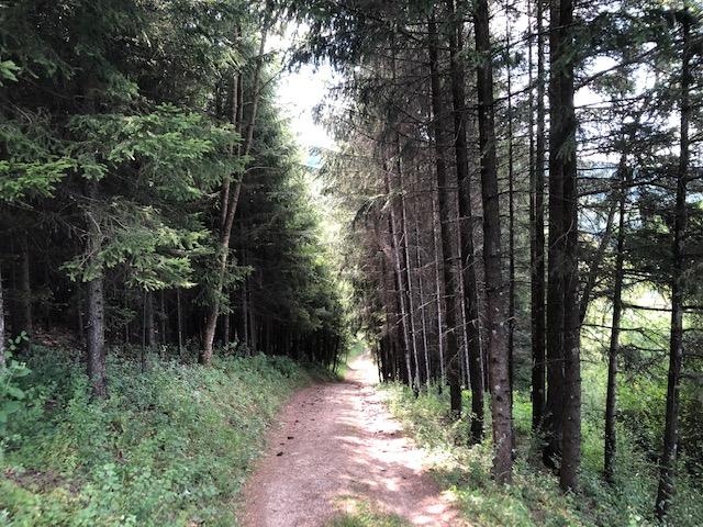 Steiler Waldweg bei Epfenhofen (Bild: Klaus Dapp)
