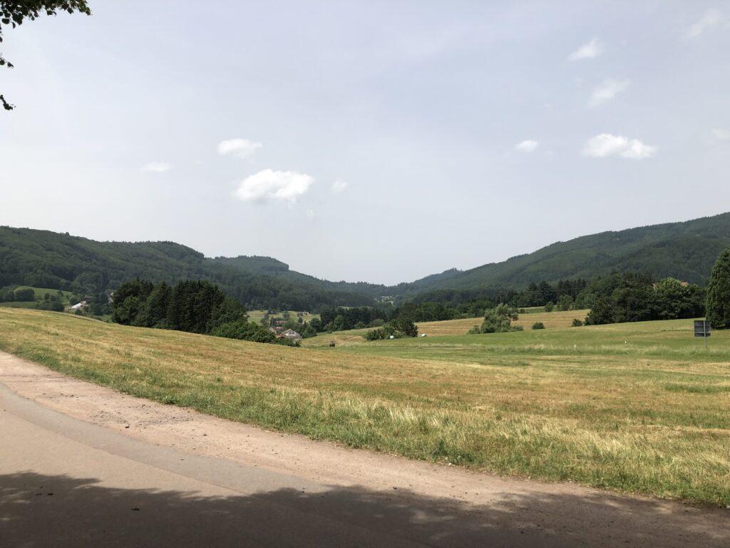 Blick in den Schwarzwald (Bild: Klaus Dapp)