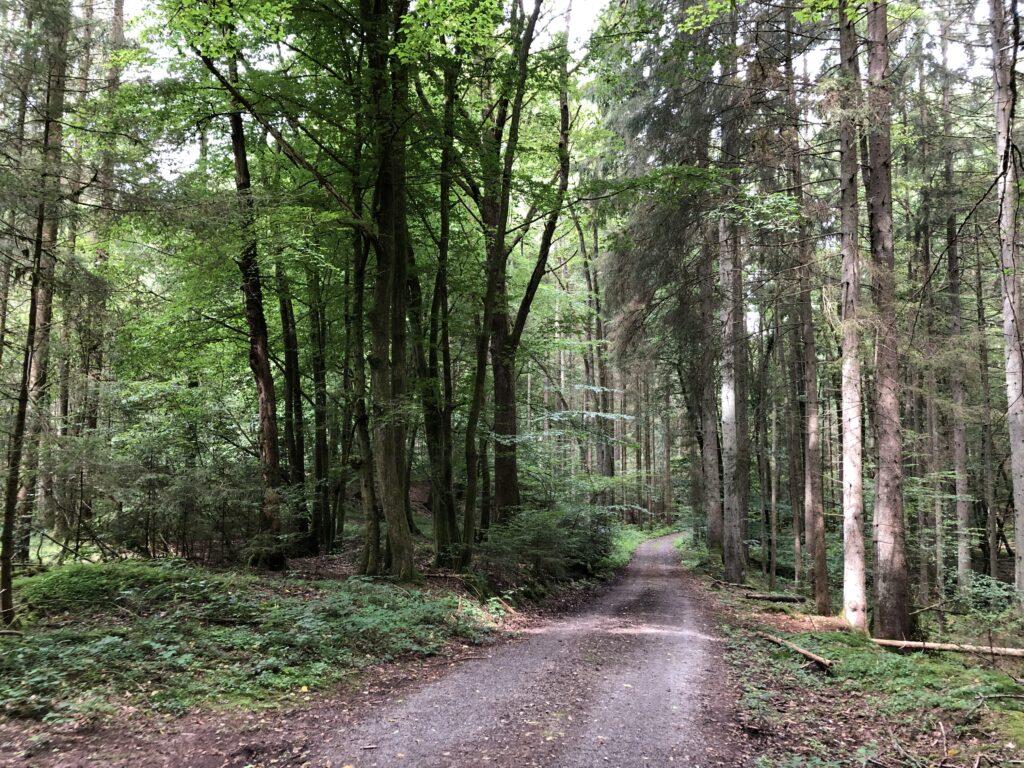Waldweg nach Rothenbuch (Bild: Klaus Dapp)