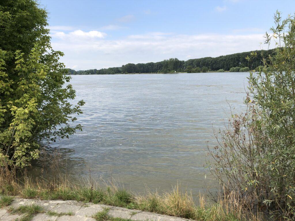 Rhein bei Kornsand (Bild: Klaus Dapp)