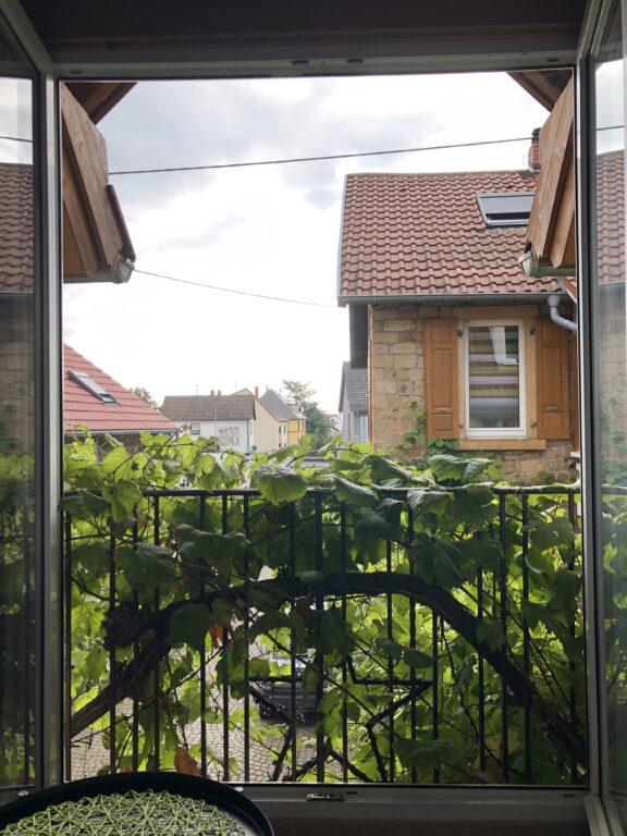 Blick aus dem Zimmerfenster im Weingut Buchert in Mußheim (Bild: Klaus Dapp)