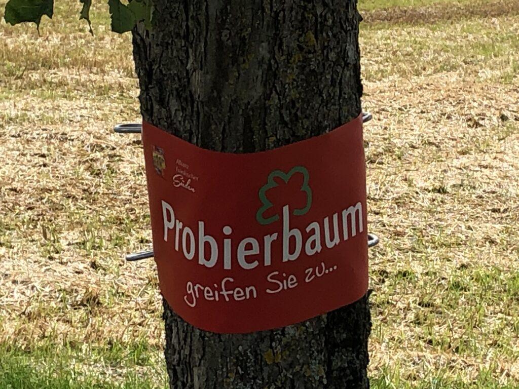 Probierbaum (Bild: Klaus Dapp)