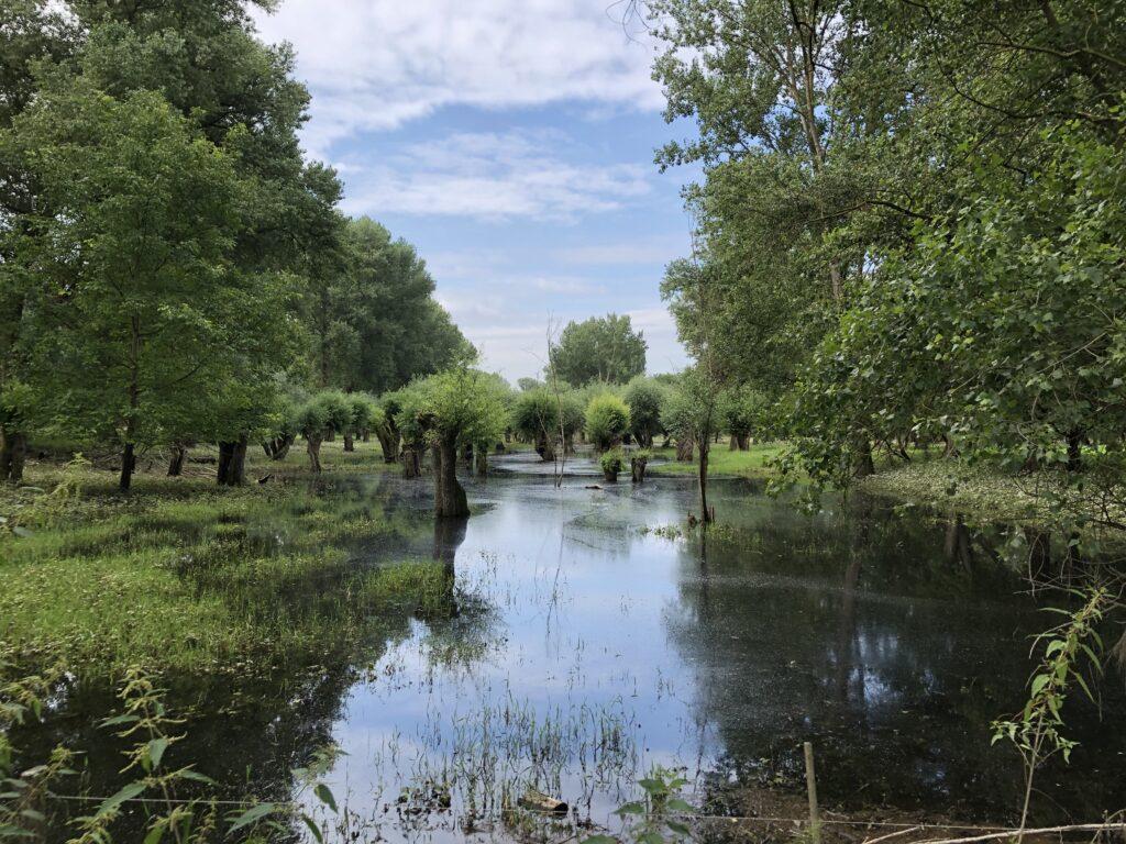 Überflutete Aue am Rhein (Bild: Klaus Dapp)